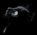 Black_cat_head_cryazone.com